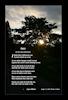 Trees © Miriam A. Kilmer